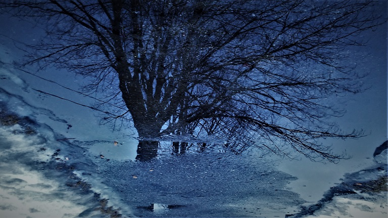 Rotated photo of tree reflected on water